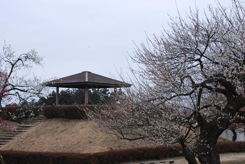 蟹沢会場の展望台と古木